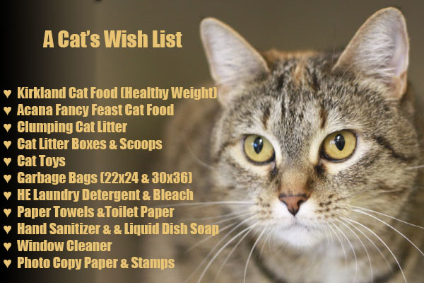 A Cats Wish List